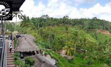 นั่งจิบเบียร์ชมวิวนาข้าวขั้นบันไดอันเลื่องชื่อ Tegalalang Rice Terraces ของอินโดนีเซีย ที่ Surya Terrace Cekingan @ Bali